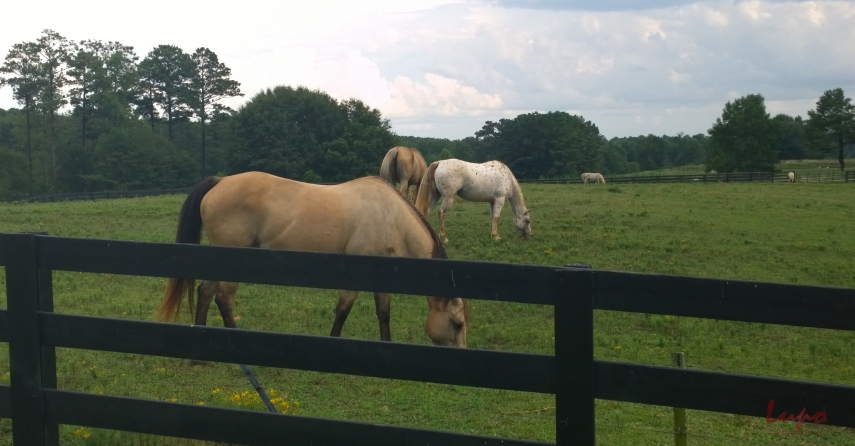 Serenbe Horses #2, 17 August 2014