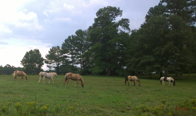 Serenbe Horses #3, 17 August 2014