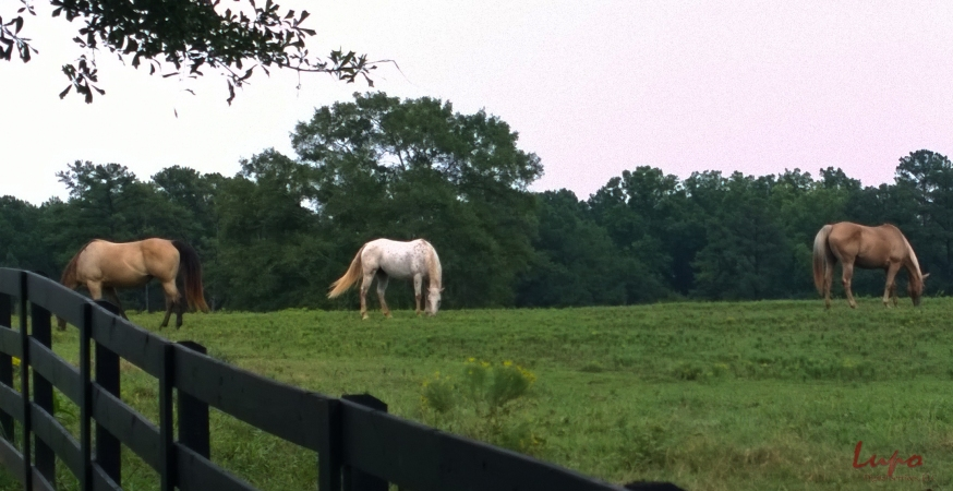 Serenbe Horses #5, 17 August 2014