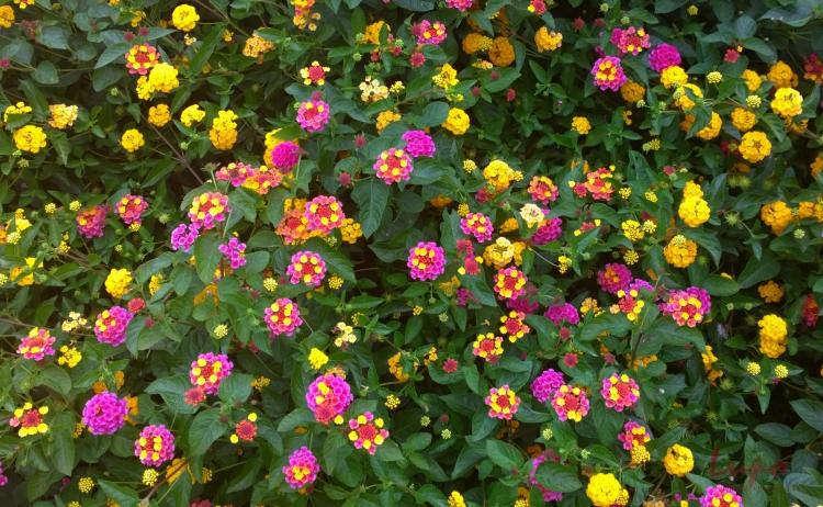 Flowers, Peachtree Street, 26 September 2014