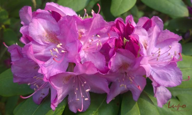 Flowers, Stone Mountain, GA, 26 April 2014, #1