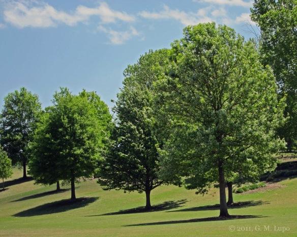 Piedmont Park Trees