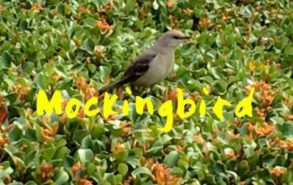 Mockingbird Title Image